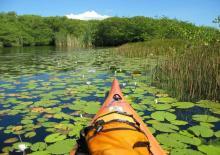Biotopo y Reserva Natural Monterrico