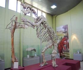Museo de Paleontología y Arqueología de Estanzuela Roberto Woolfolk