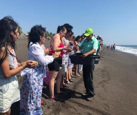 Liberación de tortugas en Monterrico
