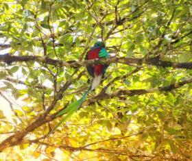 Reserva Natural Privada Ranchitos del Quetzal