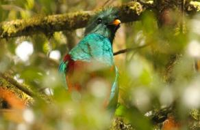 Reserva Natural Privada Ranchitos del Quetzal