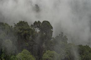 Corredor del Bosque Nuboso