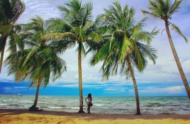 Punta de palma