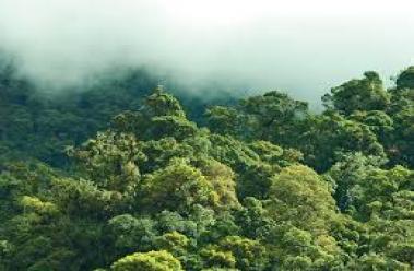 Montaña Yalijux