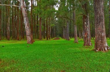 Reserva Natural El Nance