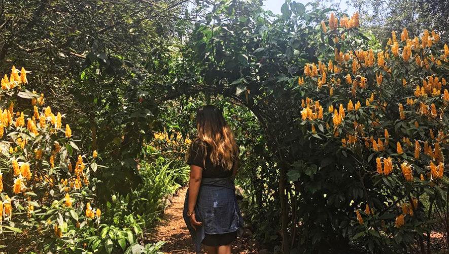 Tour del Níspero, Macadamia y Aguacate