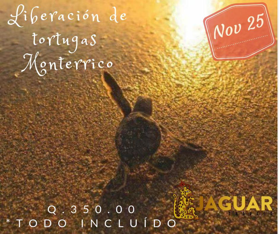 Liberación de Tortugas - Monterrico
