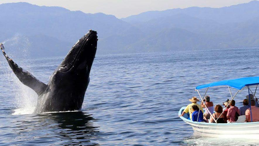 Avistamiento de ballenas en Guatemala