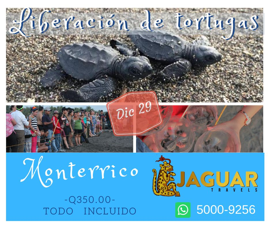 Liberacion de tortugas - Monterrico
