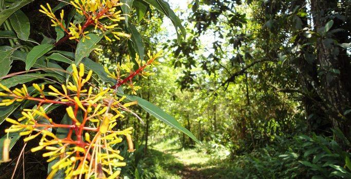 Reserva Natural Privada Posada del Quetzal