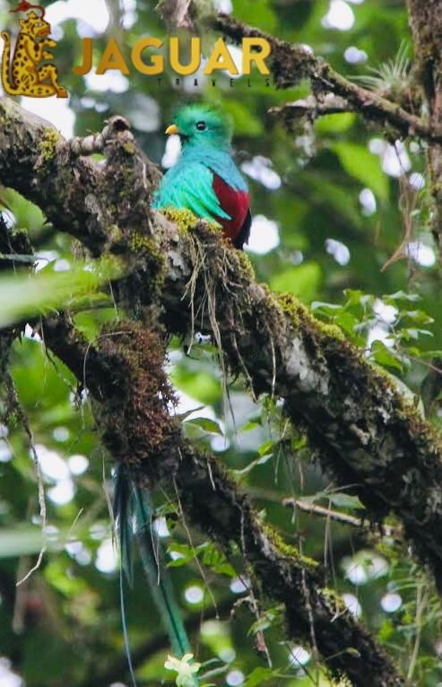 Avistamiento del Quetzal